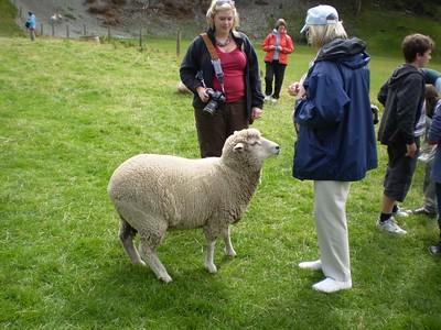 Sheep Feed - William Howarth