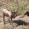 Crazy antlers