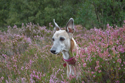 Penny in the heather