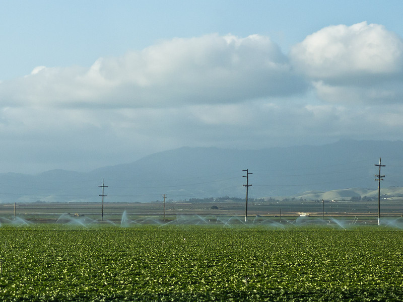 Fields outside Salinas