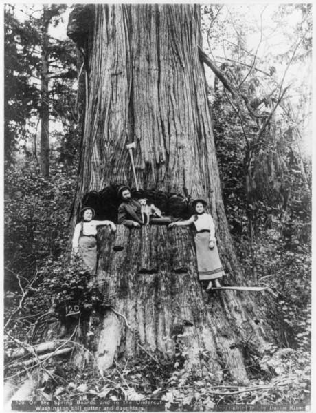 Logging in Seattle?
