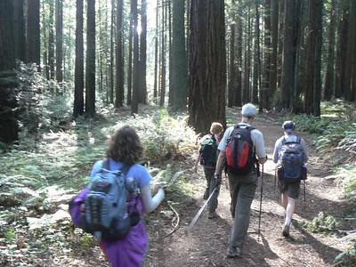 1st the grassy ridge, now the Redwood Forrest