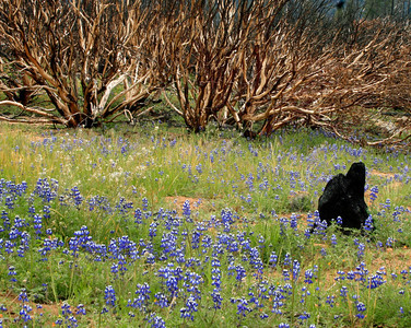 Wildflowers bloom best right after a fire.