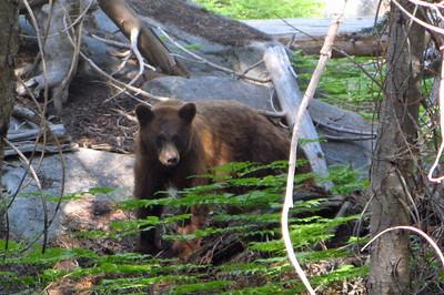 Bears teach me to take a season to rest.