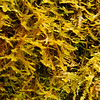 Cave moss.