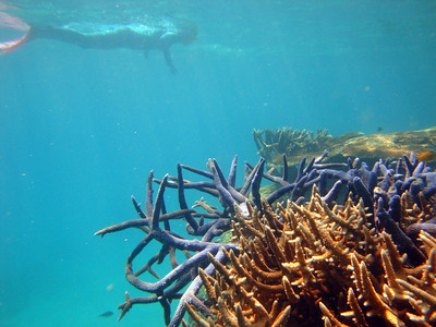 The pontoon is anchored in 60 m of water, next to Hardy Reef - which offers beautiful snorkelling.