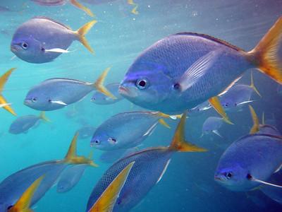 Fish school 1