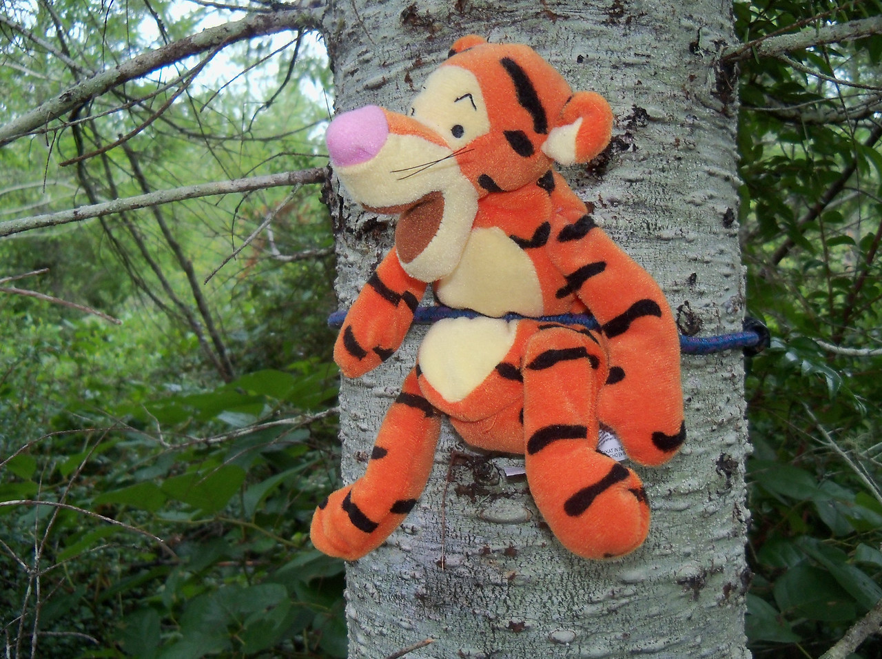 "Whinny the Pooh's friend ""Tigger"""
