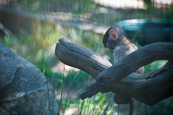 Safari West -- African Safari in Sonoma, CA!