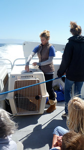 Two young resued sea lions were on our boat. We got to see them relased back into the ocean at Santa Cruz Island.