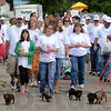 Tribune-Star/Jim Avelis<br /> Dog trot: The International Brotherhood of Electrical Workers contingent was led by several dachshunds to stat their part of Monday's Labor Day parade.