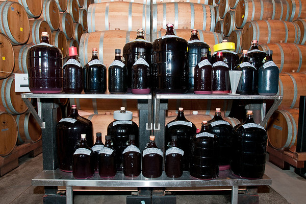 After siphoning out the wine from the barrels they put it in these huge jugs. Fun!
