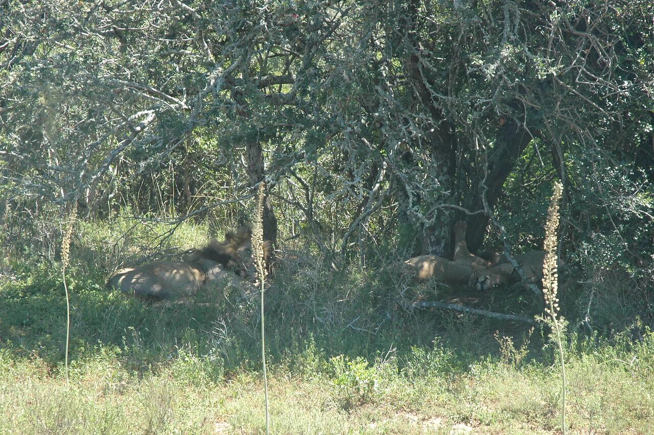 Hluhluwe-Umfolozi Game Reserve - Leslie Rowley