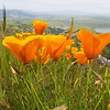 Poppies and San Antonio reservoir
