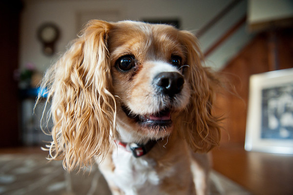Our wonderful little dog… isn't Dash cute?!
