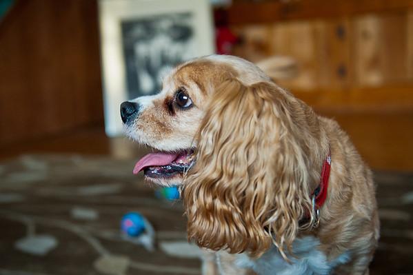 Our wonderful little dog… isn't Dash cute?!