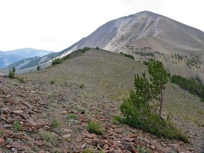 Trail to Arc Dome, 11,773 feet