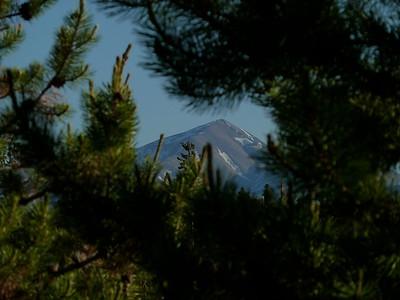 Mt Elbert through the trees