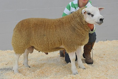 Procters Santander, PFD110100 - Supreme Champion, sold for 2100gns