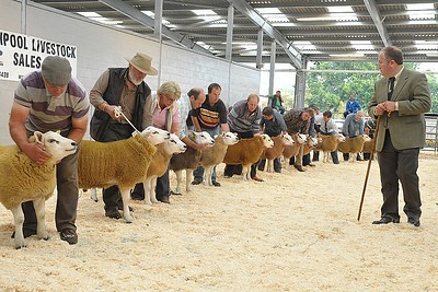 (17) Judging of Ram Lambs