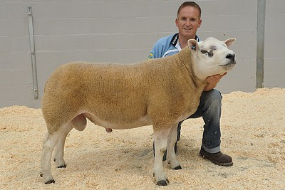 Joint sale topper, joint highest priced Shearling Ram & Reserve Champion overall - Caerinion Ronaldo, PEC10003 - sold for 4200gns