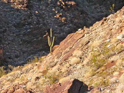 First  saguaro seen
