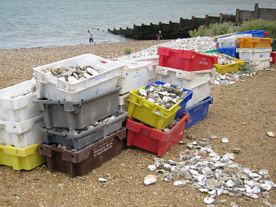 Oyster shell discards