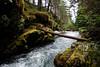 Beautiful Alaskan woods surround us as we walk the line.