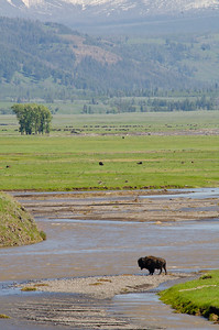 The Lamar Valley.