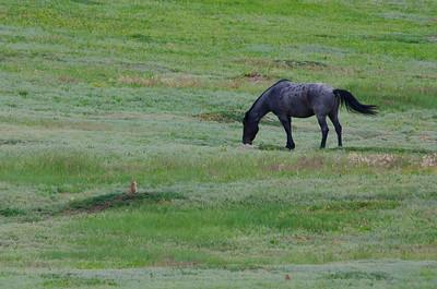 Wild horse and prairie dog.