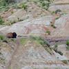 Bison in the badlands at Roosevelt National Park.