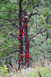 Spirit ribbons.