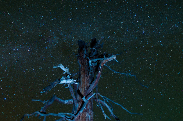 We went over to Cook's Meadow to shoot some star trails around this tree and this is one of those photos. I forget what lit up the tree, perhaps one of our flashlights. You can kinda make out the milky way here too.