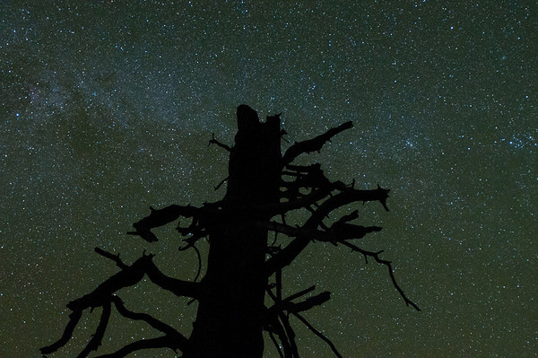 We went over to Cook's Meadow to shoot some star trails around this tree and this is one of those photos. You can kinda make out the milky way here too.