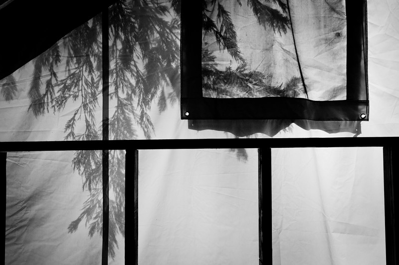 When I finally got back to the tent-cabin at about 8:30am my friends were still asleep. I let them sleep a bit longer and started reviewing my photos. Once they finally woke up I realized there was this neat silhouette of the trees on the tent-cabin, which has a thick fabric sheet as the walls.