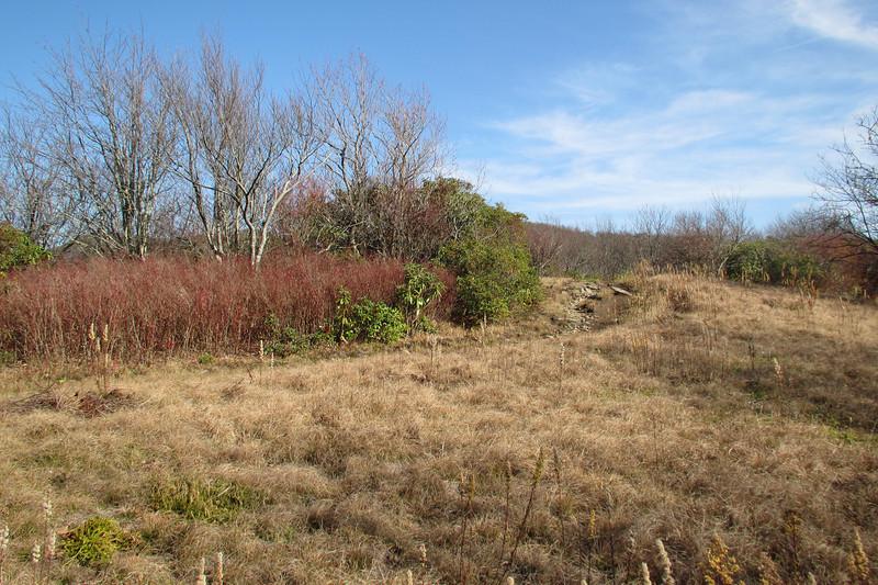 Spence Field