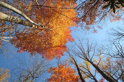 Smoky Mountains National Park  (Rocky Top area) October 2011