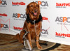 NEW YORK, NY - NOVEMBER 17:  Ricochet (ASPCA Dog of the Year) attends the 2011 ASPCA Humane Awards luncheon at The Pierre Hotel on November 17, 2011 in New York City.  (Photo by Steve Mack/S.D. Mack Pictures) *** Local Caption *** Ricochet