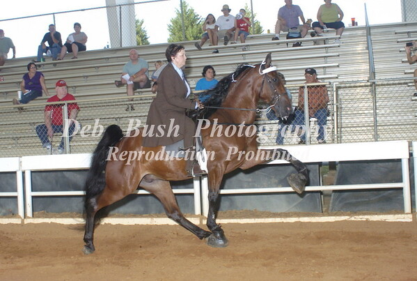 CLASS 8  AMATEUR 50 & OVER SPECIALTY