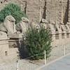 2011Egypt5