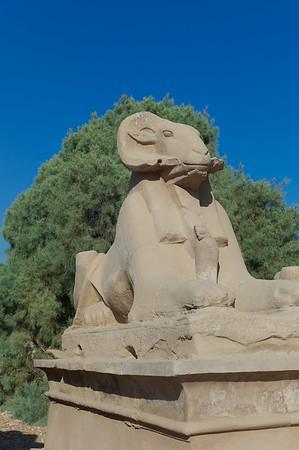 2011Egypt6