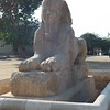 2011Egypt173
