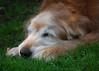 3587 Sasha June 1 2011
