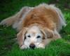 3593 Sasha June 1 2011