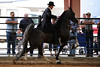 2011 Horse Shows : 3 galleries with 310 photos
