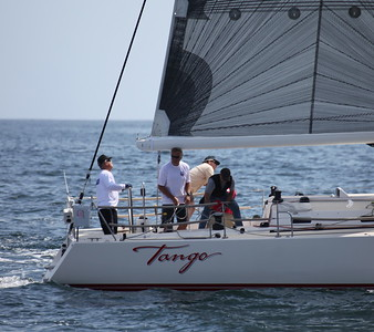 Tango - BYC Series 66 #1