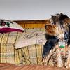 Pups 08-07-11