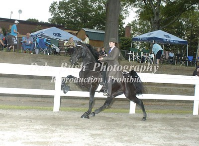 CLASS 10  WALKING PONY 17 & UNDER SPECIALTY