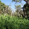 0207_Lemosho Glades 2