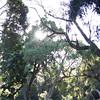0209_Trees at Big Tree Camp